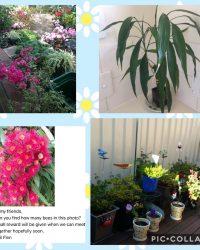 Ladies' Flower and Plant Week 02