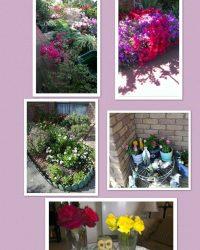 Ladies' Flower and Plant Week 03