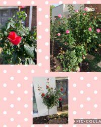 Ladies' Flower and Plant Week 04