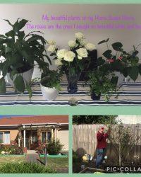 Ladies' Flower and Plant Week 05